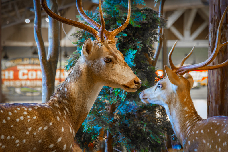 I went deer hunting the other week and shot these two deer. I went hunting for something interesting to shoot and found these two deer at a Bass Pro shop. Photo by Tim Stanley Photography.