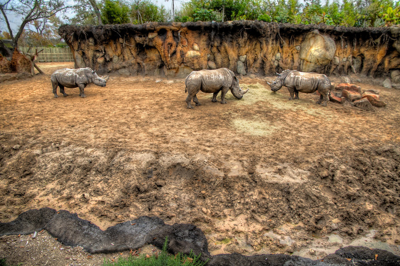 It was crowded at the zoo, so I gave up my spot and had just walked away after taking this photo, when the rhinoceros on the left slowly approached the two eating. The center rhino charged the visitor and prevented him from joining their meal. The lonely outcast was forced to seek a different spot to graze by himself. It just goes to show you not everyone is going to be nice to you and don't be so quick to give up your front spot at the zoo, no matter how many kids you might be blocking. Photo by Tim Stanley Photography.
