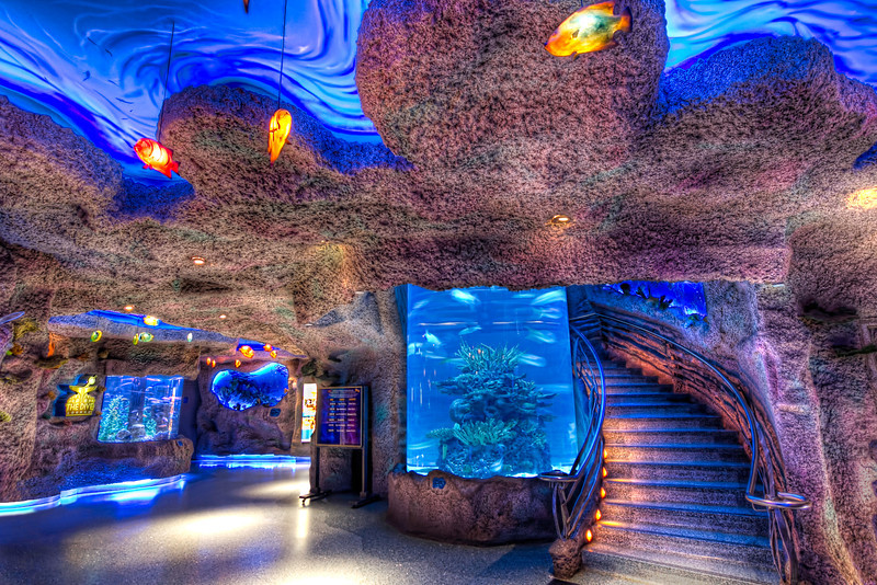 The centerpiece of the Houston DowntownAquarium is the restaurant and the large fish tanks throughout. There is a winding staircase around a huge, verticalfish tankas you make your way to restaurant upstairs. But even if you don't eat, you can still sneak in a take a peak at the bottom half. Photo by Tim Stanley Photography.