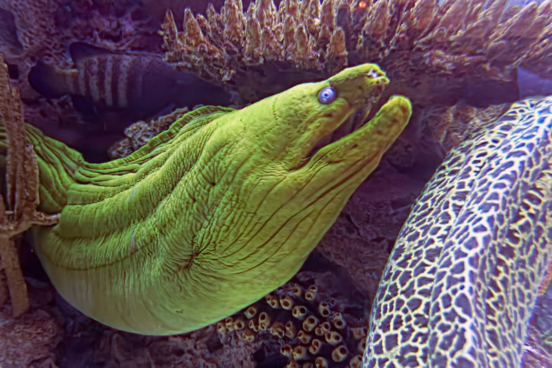 Underwater photography is a hobby that takes a lot of skill and money. Or you can go to find a really big aquarium like I did. Photo by Tim Stanley Photography.